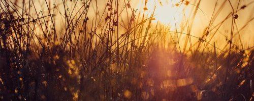 Armonía con la naturaleza
